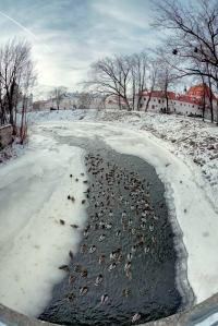 along the Vilnelė river - photo by Vincas Alesius